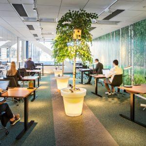 végétalisation bureaux espaces travail