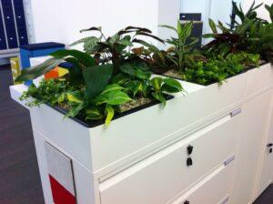 Aménagement espaces de travail, végétalisation des bureaux - Bloom Inside Lyon